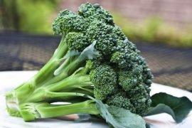 Как правильно выращивать брокколи на даче