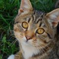 Как назвать кота мальчика?