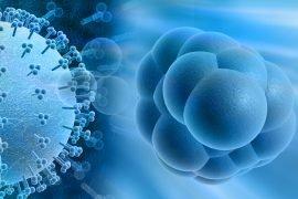 Что такое цитомегаловирус и как победить болезнь