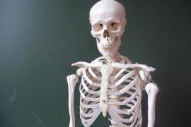 Сколько у человека костей