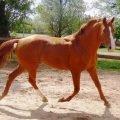 Самые красивые лошади в мире – ТОП-5 с фото и описание