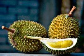 Дуриан – самый вонючий фрукт в мире