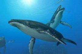 Самые большие животные в мире – ТОП-10 рекордсменов