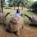 Самая большая черепаха в мире