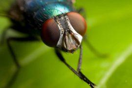 К чему снятся мухи. Разнообразные толкования