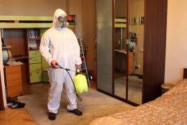 Как избавиться от блох в квартире, причины появления