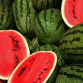 Как правильно выбрать спелый и вкусный арбуз