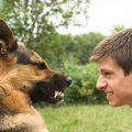 Что делать, если собака перестала быть другом?