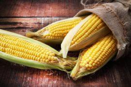 Как варить кукурузу в початках?