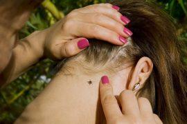 Всё, что необходимо знать о прививках от клещевого энцефалита
