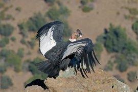 Самая долгоживущая птица в мире – фото и описание