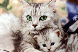 10 опасных вещей, подстерегающих в каждом доме