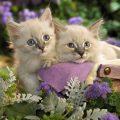 Подборка самых милых картинок в мире