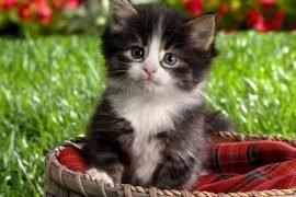 10 самых милых котят в мире