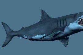 Самая большая акула в мире мегалодон: фото