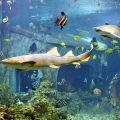 Самый большой океанариум в Москве