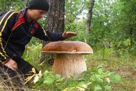 Самый большой белый гриб