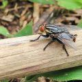 Самое опасное в мире насекомое – ТОП-10 с фото