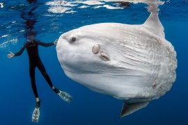 Самые необычные аквариумные и морские рыбы
