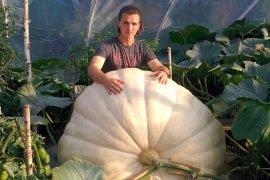 Самая большая тыква в России