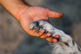 Самые преданные породы собак – ТОП-10 с фото