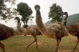 Самые распространенные животные в Австралии