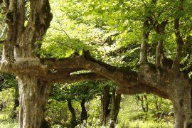 Самое твердое дерево