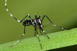 В Великобритании обнаружены комары, зараженные вирусом Зика