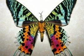 Самые красивые бабочки в мире