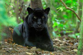 Какое животное считается самым грациозным?