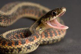 К чему снятся змеи – толкование сна