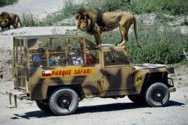 Самые необыкновенные зоопарки в мире – ТОП-5